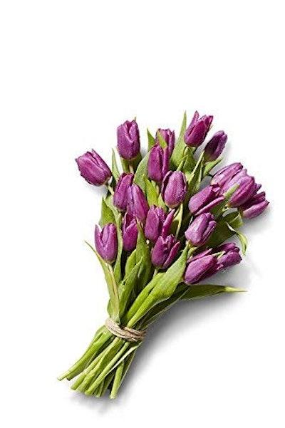Tulip, 20 Stem