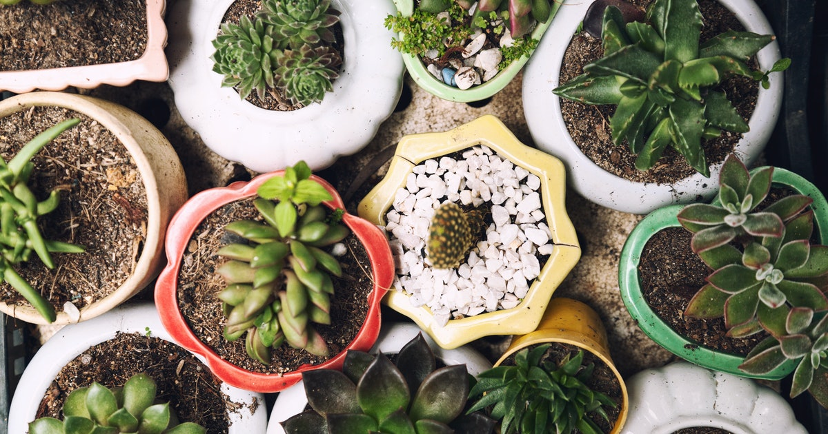 The Best Houseplant For Each Zodiac Sign, According To An Astrologer