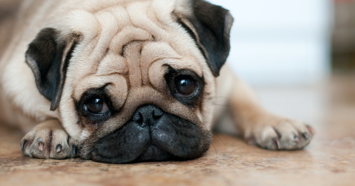 8 Dog Breeds That Will Let You Sleep In