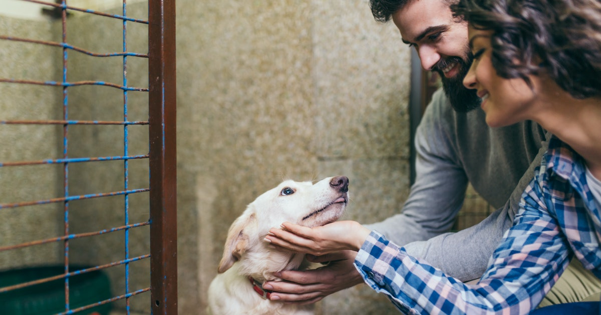 10 Questions To Ask Before Adopting A Dog, Because It's A Really Big Deal