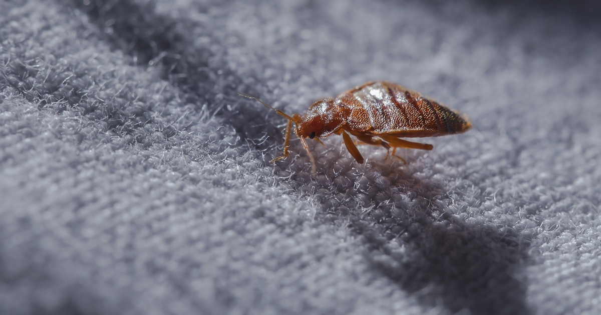 9 Items For Preventing Bed Bugs While Traveling That Will Help Protect You & Your Belonging