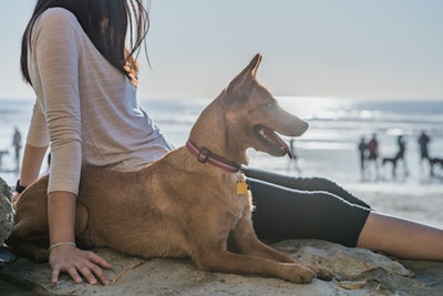 Bringing Your Dog To The Beach? Here Are 9 Things Owners Need To Know