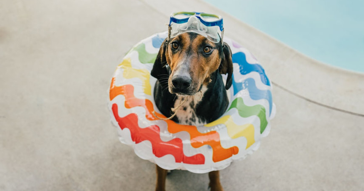 40 Captions For Your Dog On Pool Floats, Because They're Living Their Most Pawesome Life