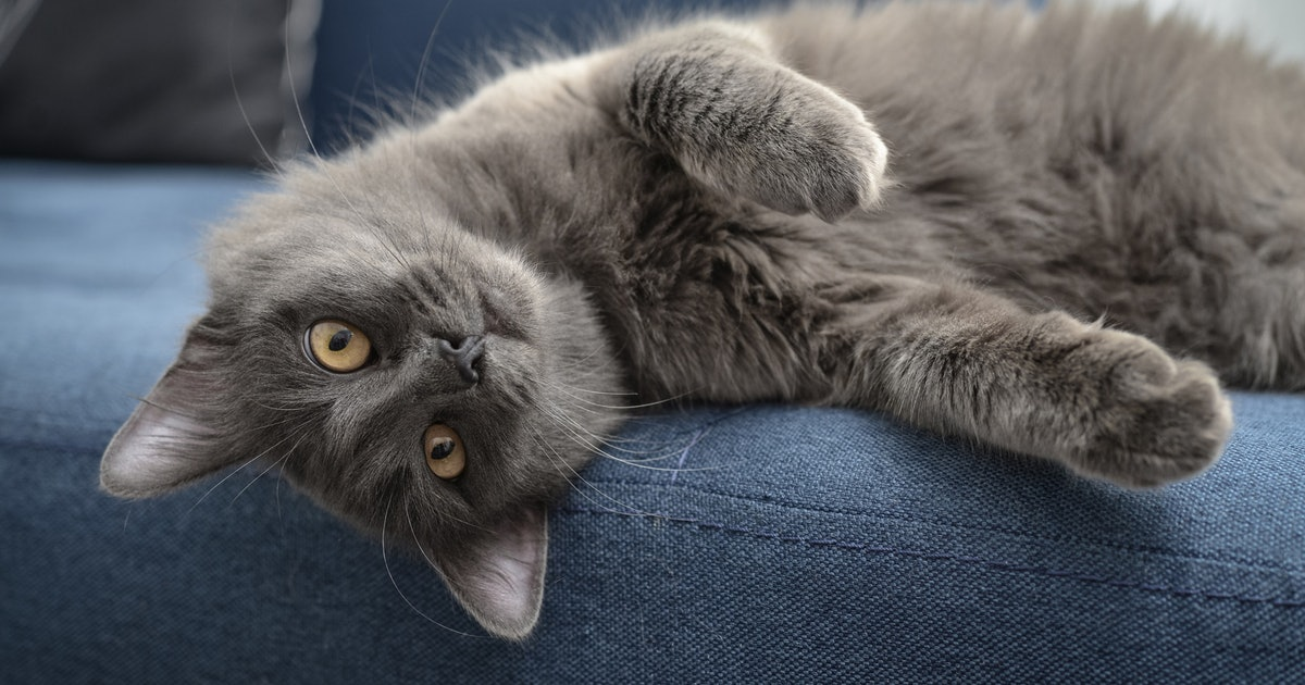 The 3 Best Probiotics For Cats
