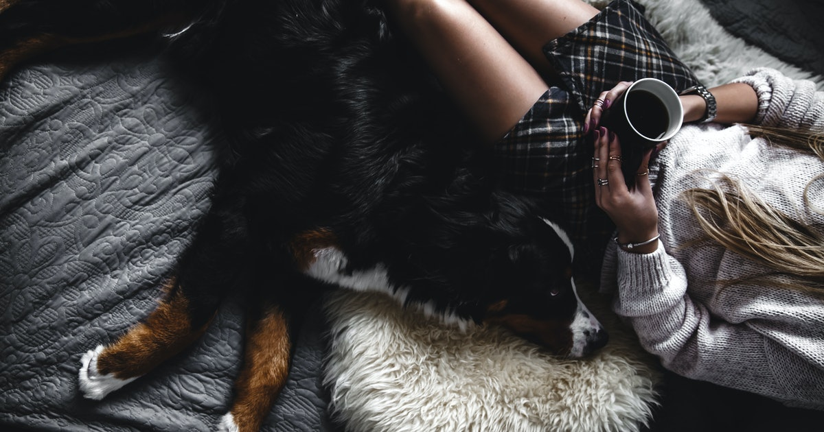 10 Best Dog Breeds For People Who Are Less Active