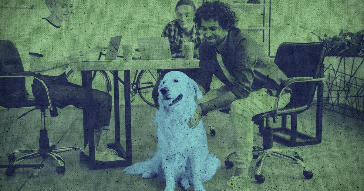 How to bring your dog to work without disrupting everyone around you