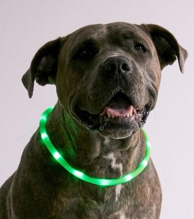 Illumiseen LED Dog Collar Necklace