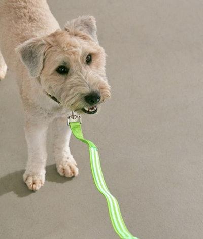 Illumiseen LED 4 ft Dog Leash