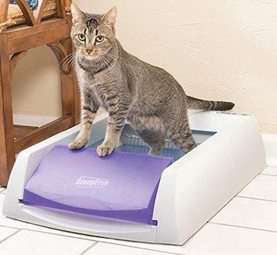 PetSafe Scoop-Free Original Self-Cleaning Cat Litter Box