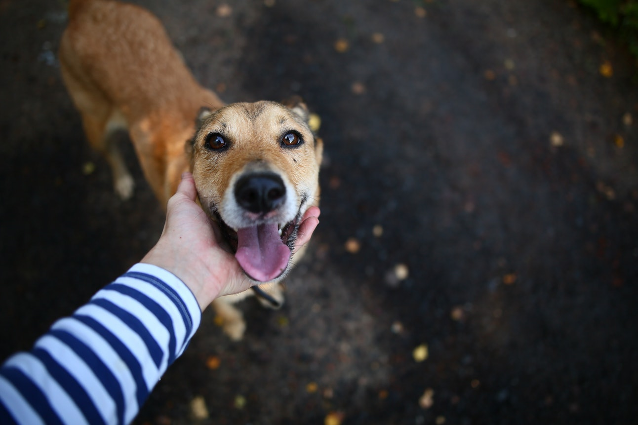 Is it OK to pet other people's dogs? What to know before interacting with someone else's animal
