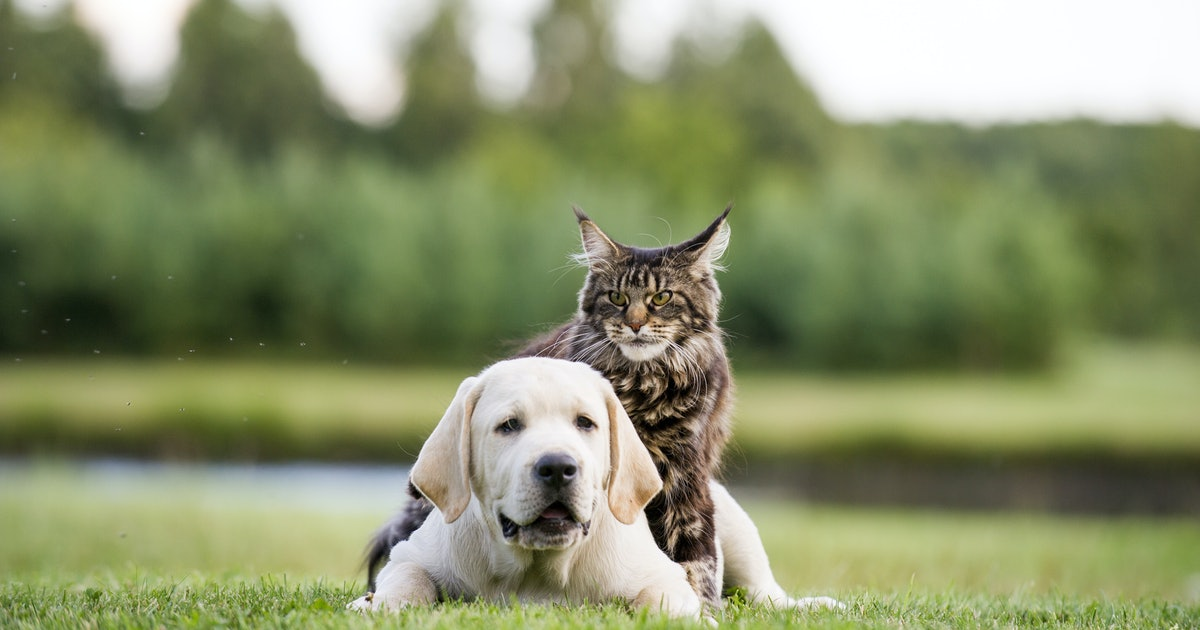Whether You're More Likely To Be A Cat Or A Dog Person, Based On Your Zodiac Sign