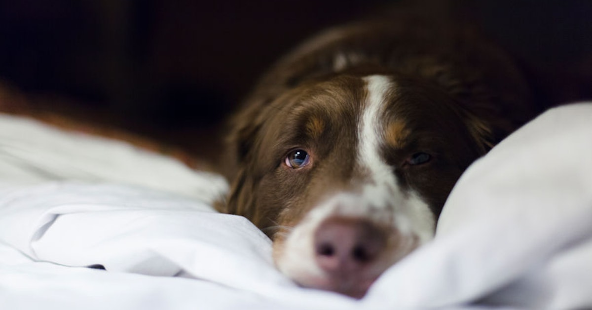 How To Cool Dogs Down At Night To Keep Them Happy & Healthy This Summer