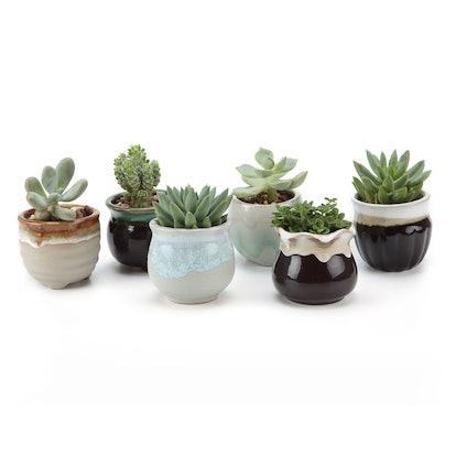T4U 2.5 Inch Ceramic Succulent Pots (Pack of 6)