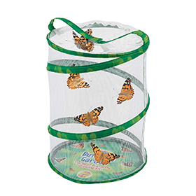 Butterfly Garden With Cup Of Caterpillars (4+)