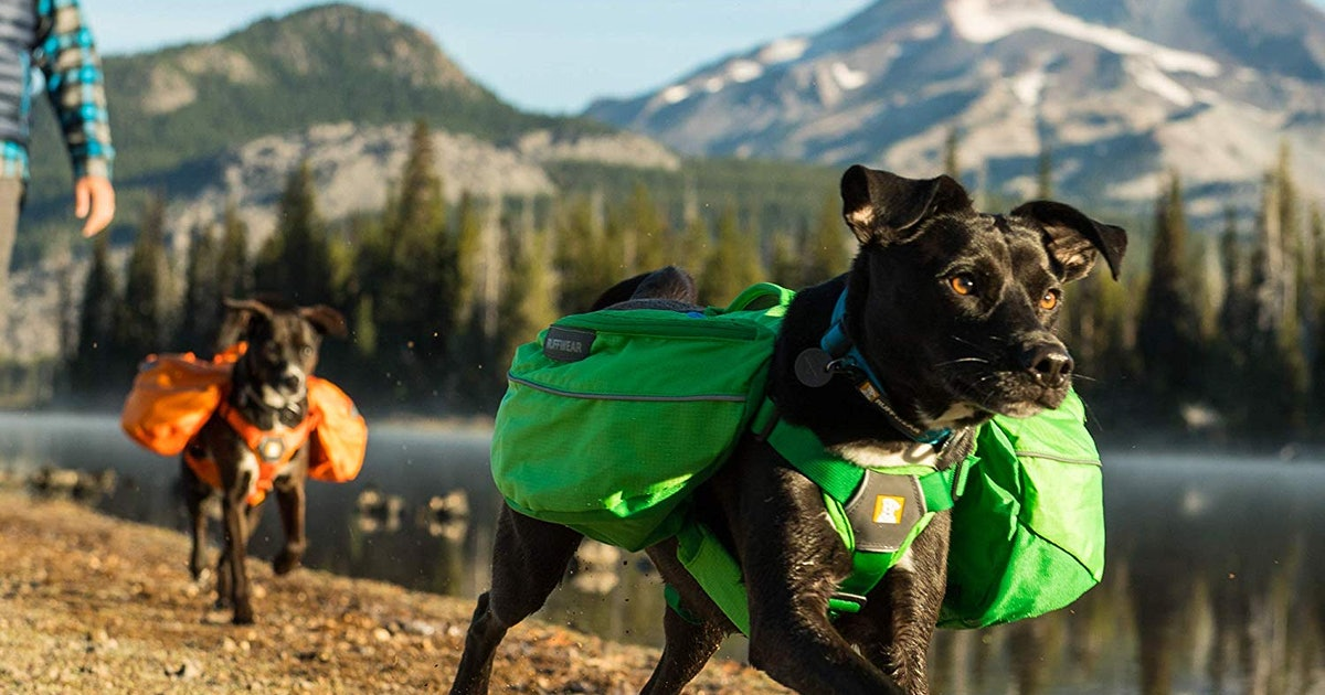 These Dog Backpacks For Hiking Are Designed For Comfort & Safety