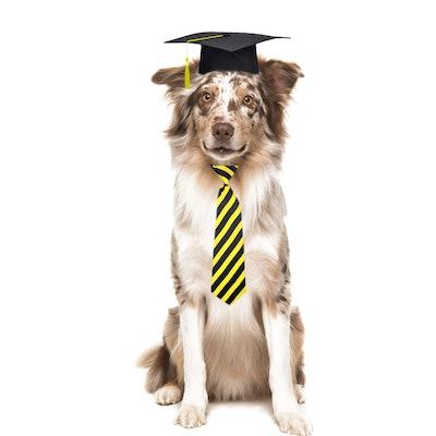 Trasen Pet Graduation Caps and Neck Tie