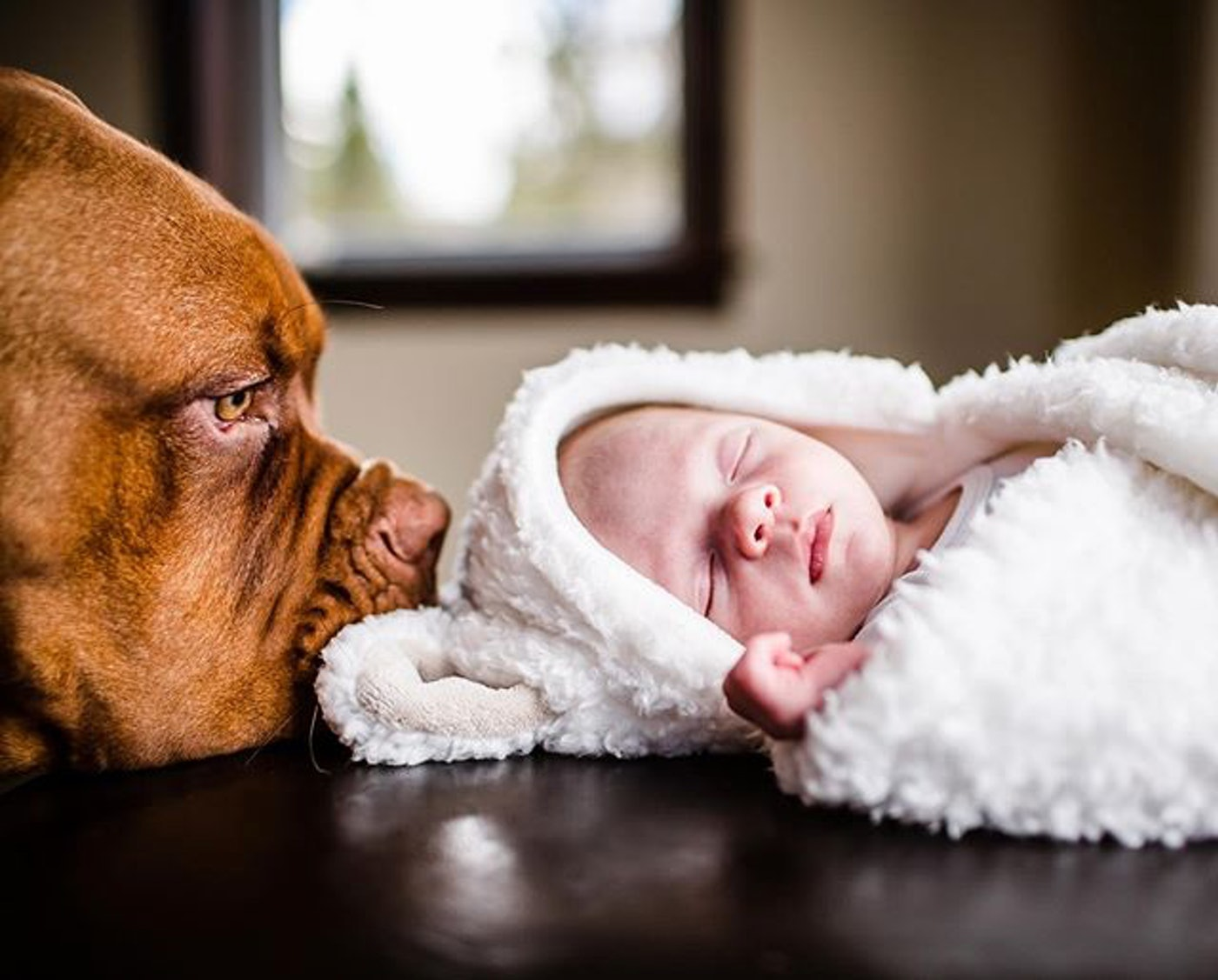 22 Baby Dog Photo Shoot Ideas You Ll Want To Steal Asap