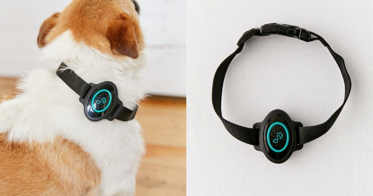 This Calming Dog Collar Emits Soothing Sounds To Relax Your Pup