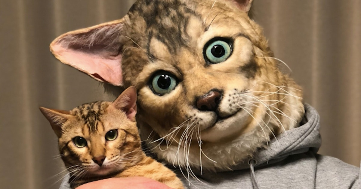 These Hyper Realistic Cat Heads Are Custom Made To Match Your Actual Cat