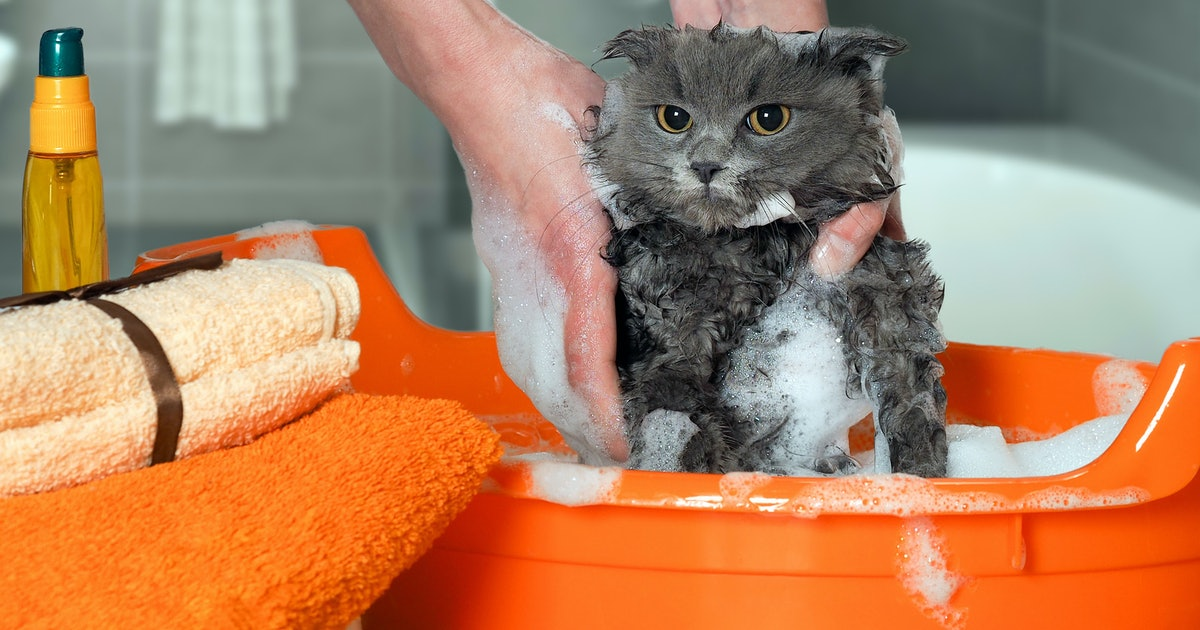 The 4 Best Shampoos For Cats