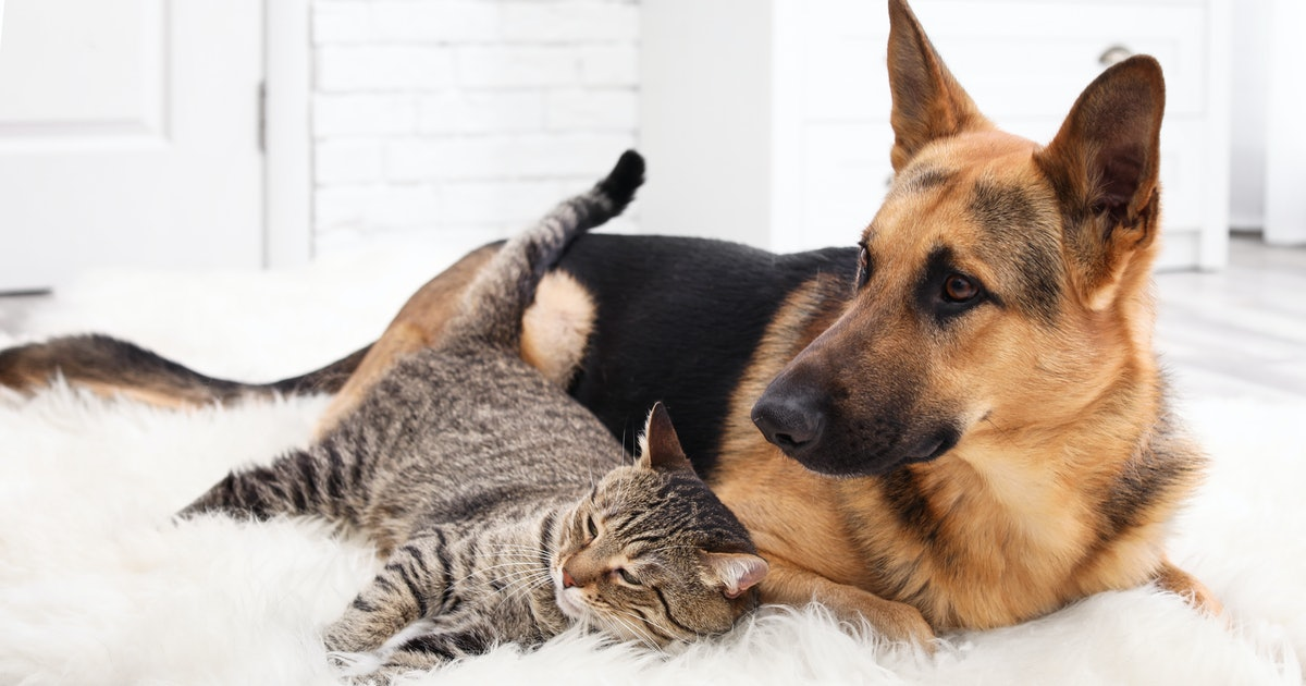 How To Help A Dog & Cat Get Along, According To Experts