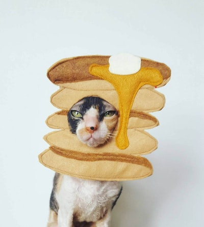 Pancake Pet Costume