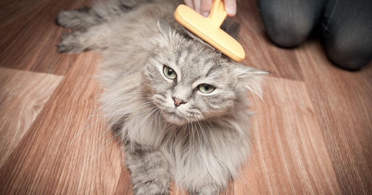 The 5 Best Brushes For Long-Haired Cats
