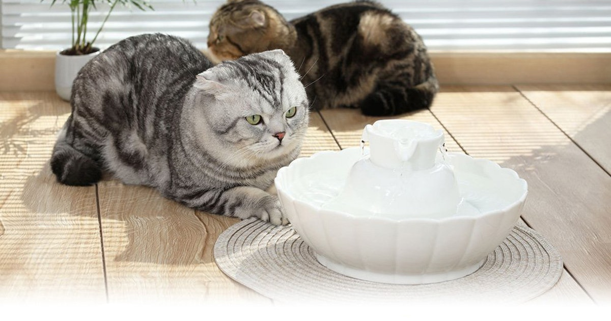 The 4 Best Cat Water Fountains