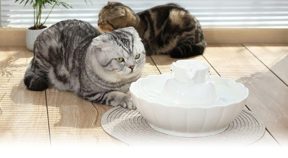 The 4 Best Cat Water FountainsCalling All Pet Parents, These Water Fountains Are The Cat's Meow - 웹