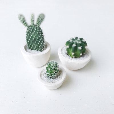SURPRISE! Micro Mini Cactus And Micro Mini Handmade Ceramic Planter