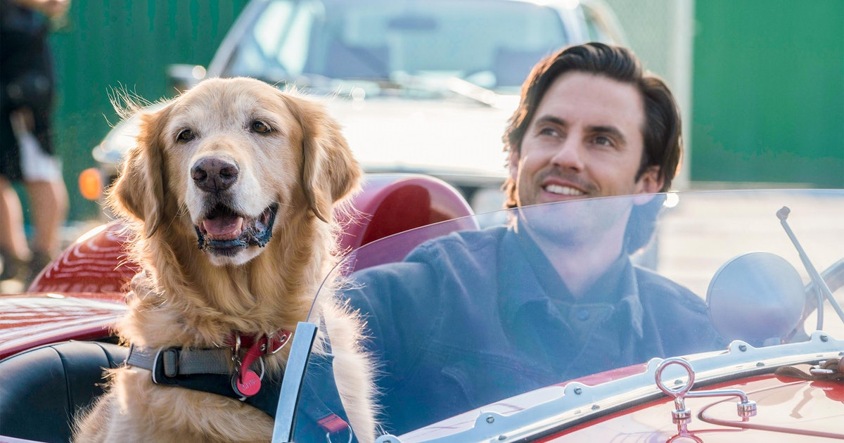22 Movies About Dogs Like 'The Art of Racing in the Rain' That'll Make You Sob