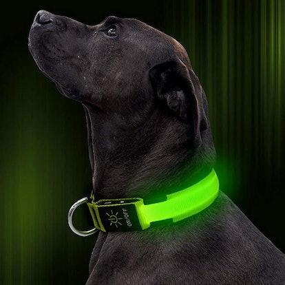 Illumifun LED Dog Collar