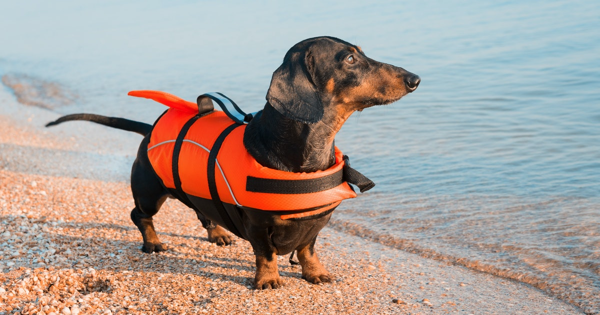 Algae can be deadly for dogs, but there's an easy way to keep them safe