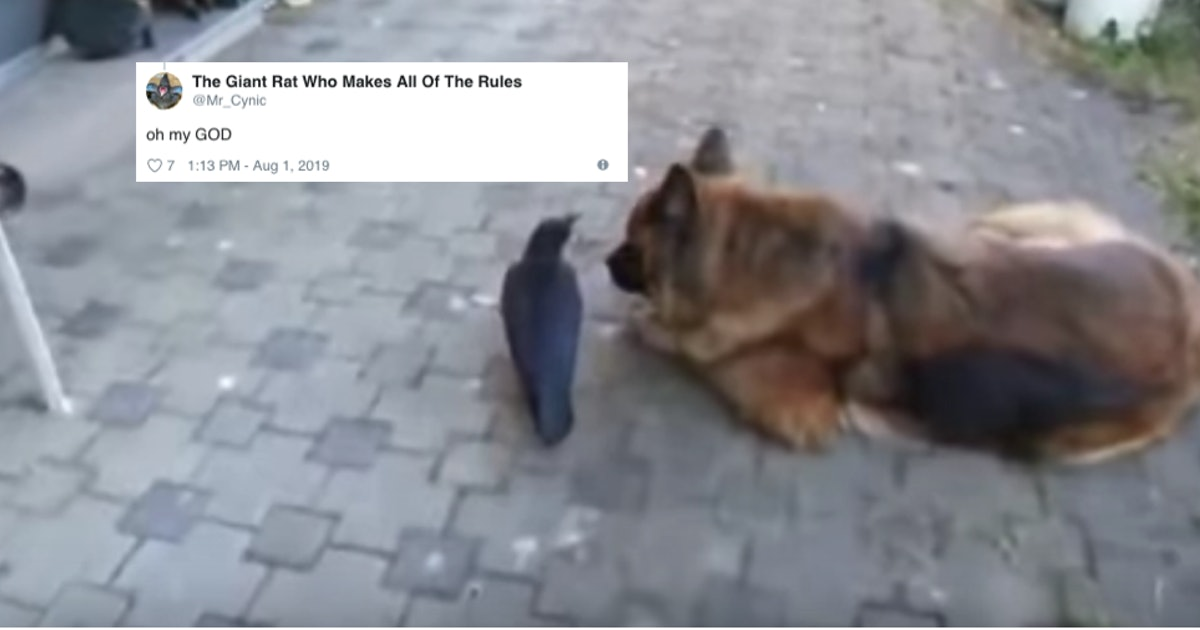 This Video Of A Dog & Crow Playing Together Has People Stanning The Unlikely Duo