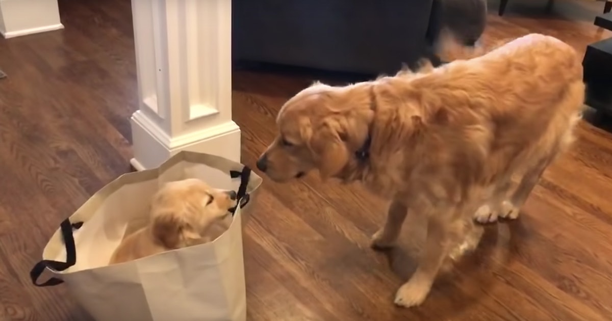 20 Cute Dog Videos You NEED To Watch Right Now