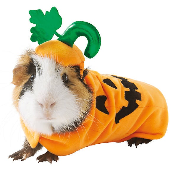PetSmart's Guinea Pig Costumes For Halloween 2019 Are The