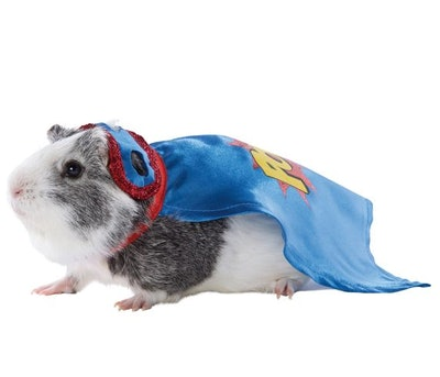 Super Hero Small Pet Costume