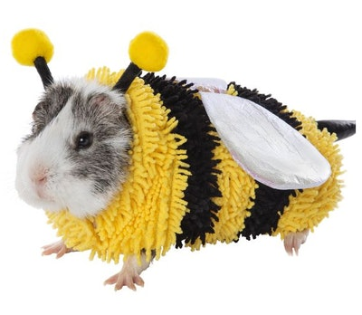 Bumble Bee Small Pet Costume