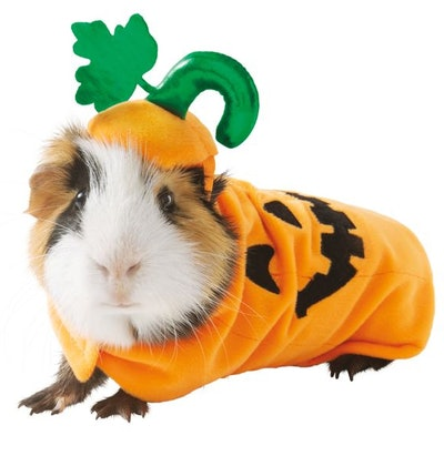 Pumpkin Small Pet Costume