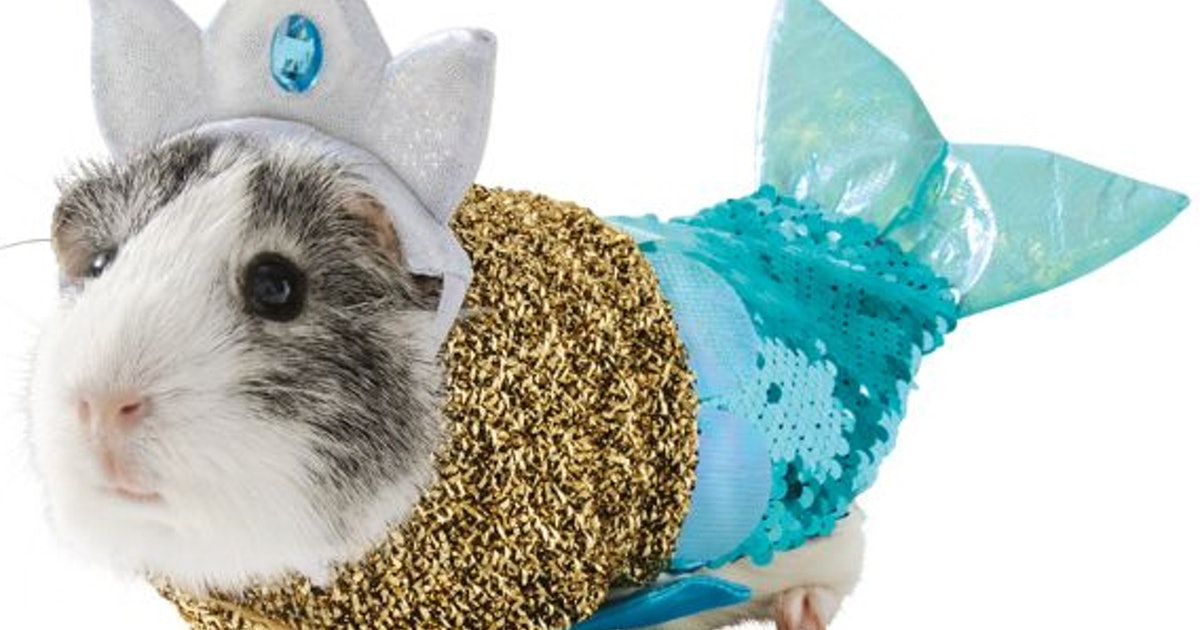 PetSmart's Guinea Pig Halloween Costumes Are So Cute They'll Make Your Whiskers Twitch