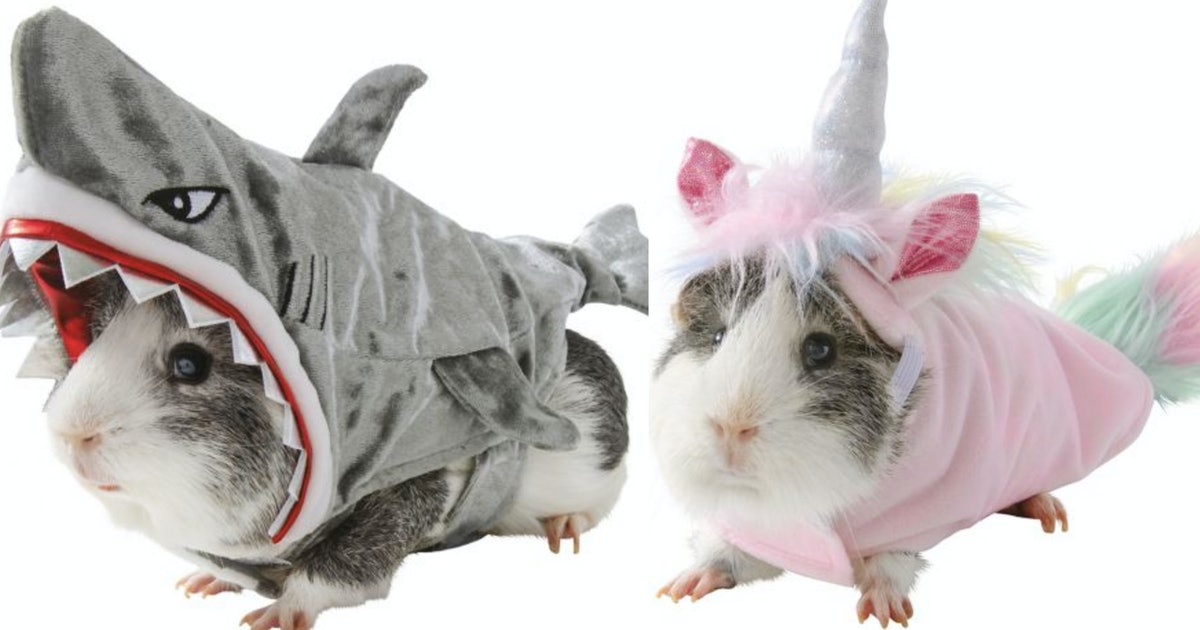 PetSmart's Guinea Pig Costumes For Halloween 2019 Are The Cutest Thing You'll Ever See