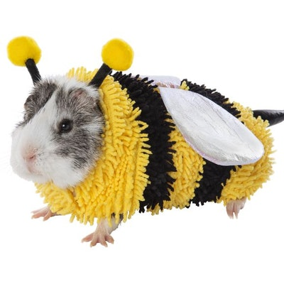 Thrills & Chills Bumble Bee Small Pet Costume