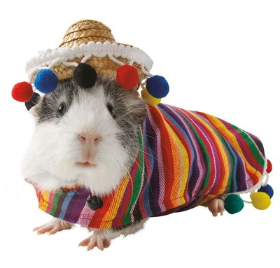 Sombrero Small Pet Costume