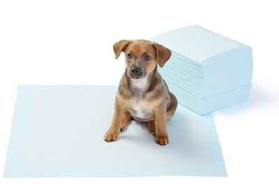 AmazonBasics Pet Training and Puppy Pads (50-Count)