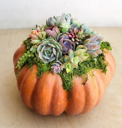 Faux Pumpkin Trimmed with Living Succulents