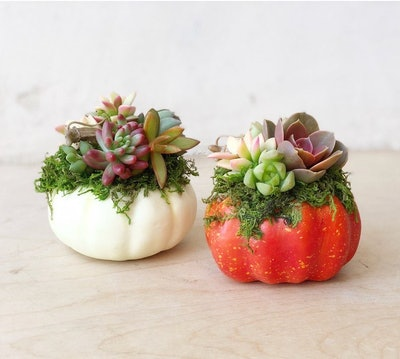 Mini Faux Pumpkin Planted with Living Succulents