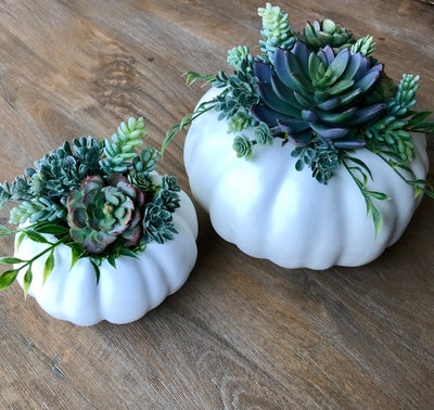 Succulent Filled Pumpkins