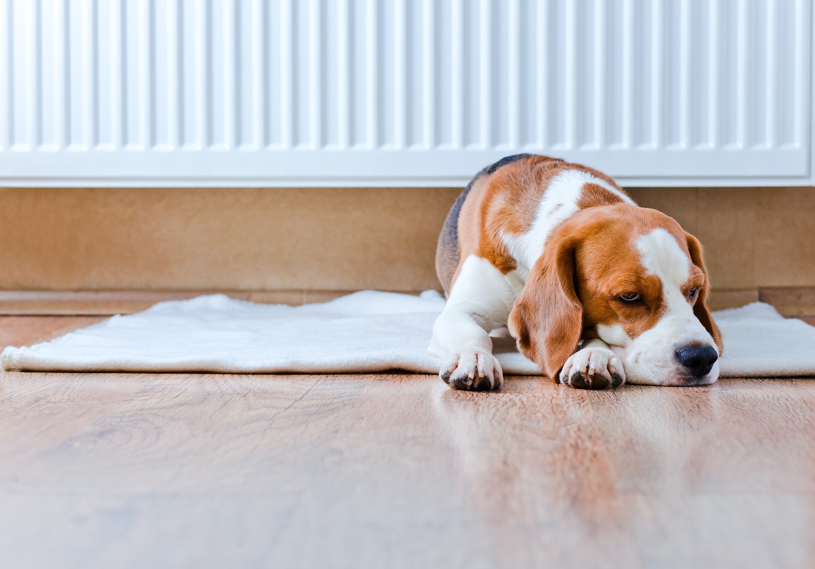 How To Clean Hardwood Floors With Dog Urine Floor Roma