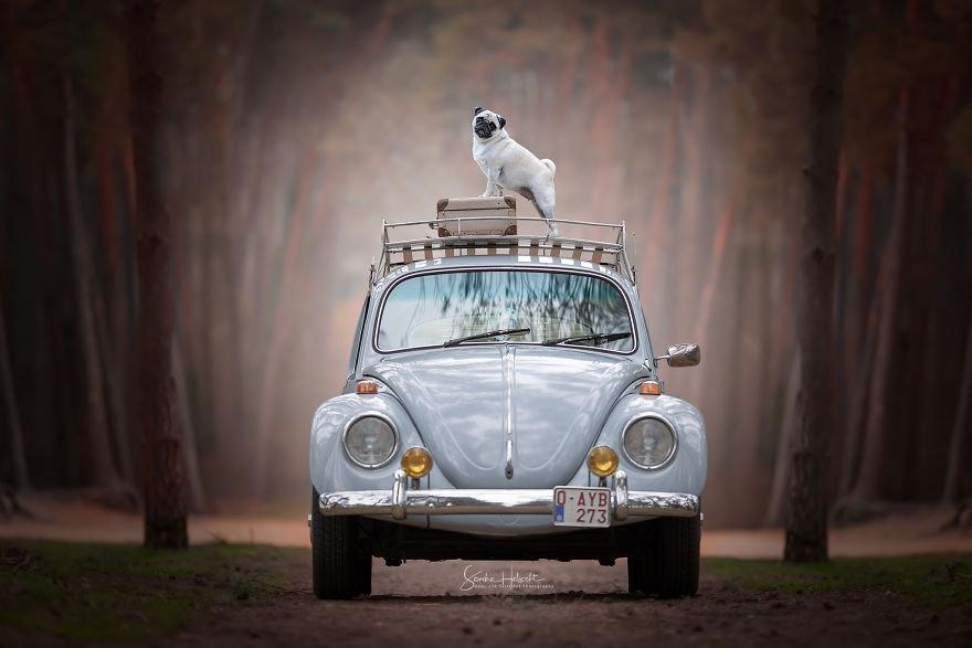 Dogs in Vintage Cars, Awwwww