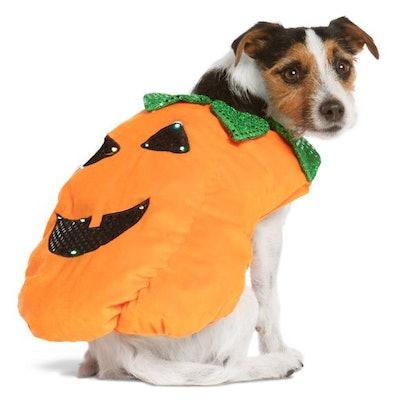 Halloween Pumpkin Pet Costume - Light-Up